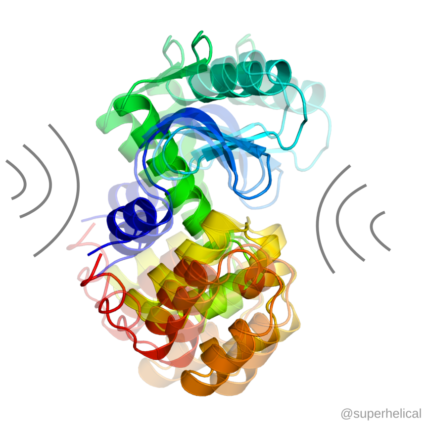 Jiggle jiggle jiggle. T4 lysozyme, PDB ID 2LZM